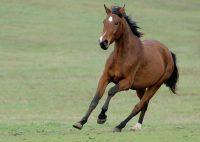 """Ένα καφέ άλογο καλπάζει στο γρασίδι. Το ζωάκι εμφανίζεται στο προσωποποιημένο παραμύθι """"Πού σε πάει το όνομά σου;"""" στην περίπτωση που ο ήρωας ή ηρωίδα έχει στο όνομά του/της το γράμμα A"""
