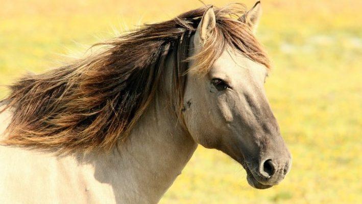 """Η εικόνα απεικονίζει ένα μπεζ άλογο με σκουρόχρωμη χαίτη. Στο προσωποποιημένο παιδικό βιβλίο """"Πού σε πάει το όνομα σου;"""", το παιδί - πρωταγωνιστής της ιστορίας μπορεί να συναντήσει ένα άλογο σε ένα μαγικό ταξίδι με το όνομα του!"""